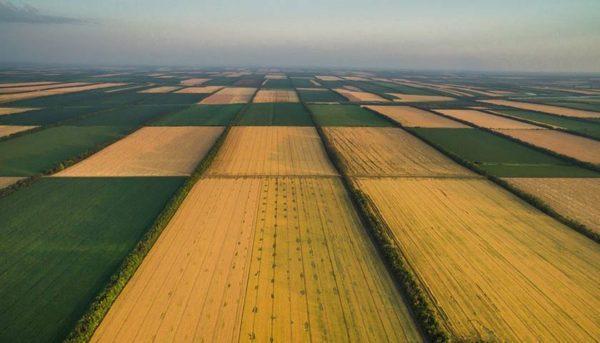 Одесская область занимает второе место по ценам на сельскохозяйственную землю