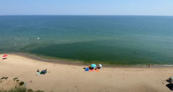 В Одесской области морские водоросли портят отдых туристам