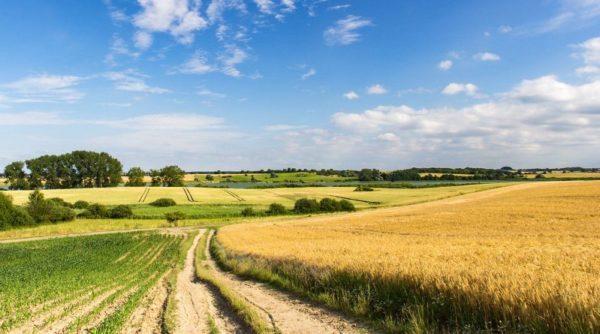 С 1 июля в Украине разрешена купля-продажа сельскохозяйственной земли: что стоит знать
