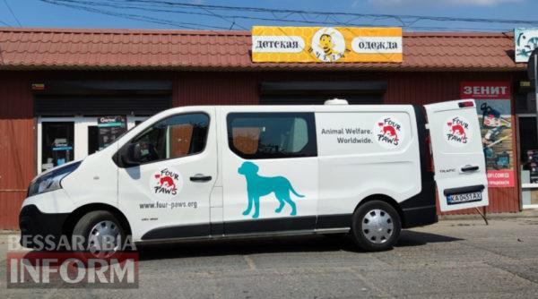 """В Килии международная волонтерская организация """"Четыре лапы"""" начала работу по стерилизации бродячих животных"""