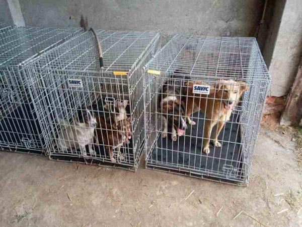 """В Арцизе международная волонтерская организация """"Четыре лапы"""" начала работу по стерилизации бродячих животных"""