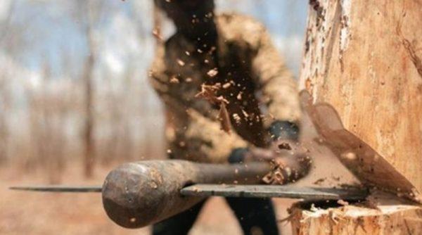 В Килийской громаде черные лесорубы продолжают опустошать посадки