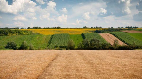 Рынку земли в Украине три месяца. Какие худшие прогнозы уже подтвердились